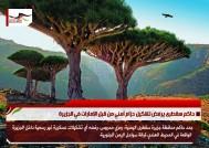 حاكم سقطرى يرفض تشكيل حزام أمني من قبل الإمارات في الجزيرة